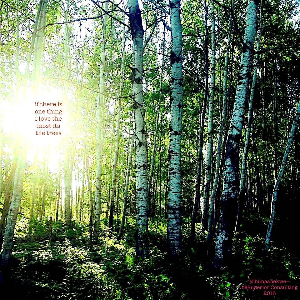 sun in trees.jpg
